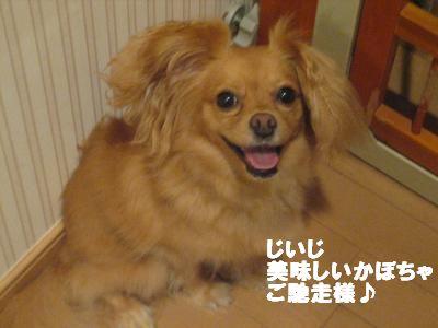 kabotya3.jpg