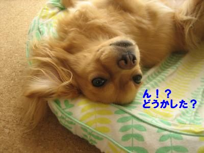 nesugata4_20101021161154.jpg