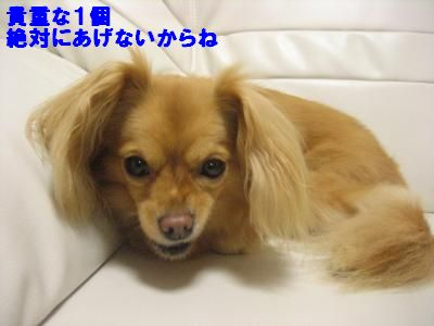 oyasyoku6.jpg