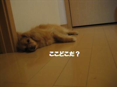suzusiibasyo2.jpg