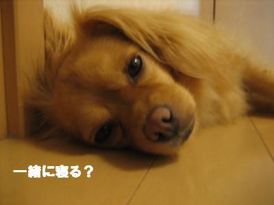 suzusiibasyo3.jpg