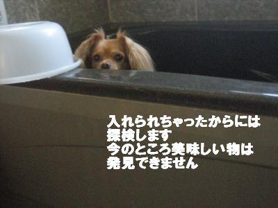 yubune.jpg