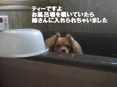 yubune2.jpg