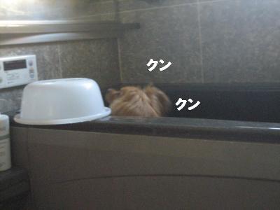 yubune3.jpg
