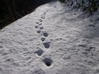 s03熊の足跡