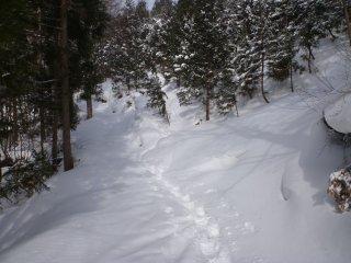 s02林道から山道へ