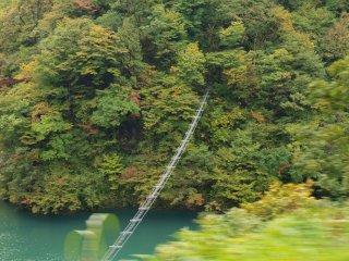 s1吊橋を渡るサル