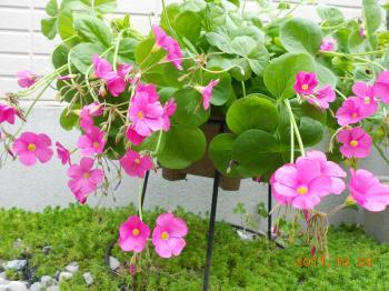 032_convert_20111004113143.jpg