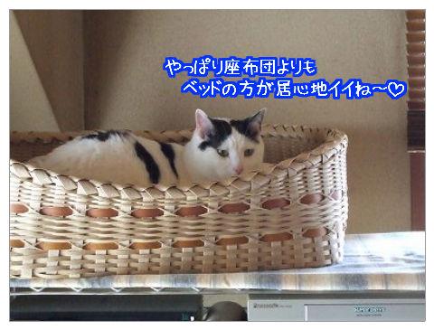 麻呂のベッド_7