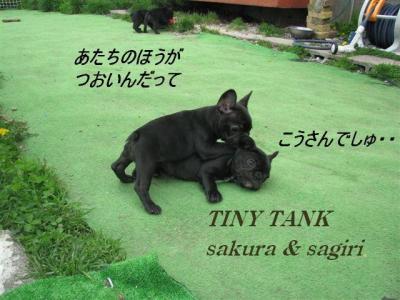 2010年5月26日桜&サギリ