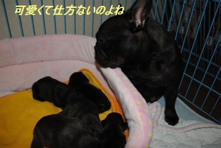 5月27日乙女ちゃんと4