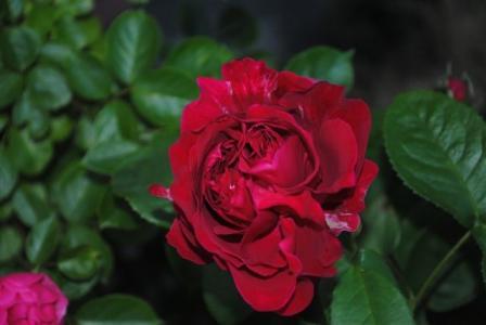 2010年6月29日LDブレスト開花