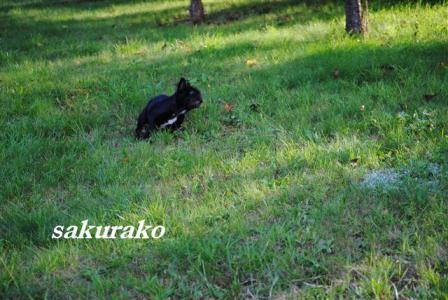 9月9日桜子