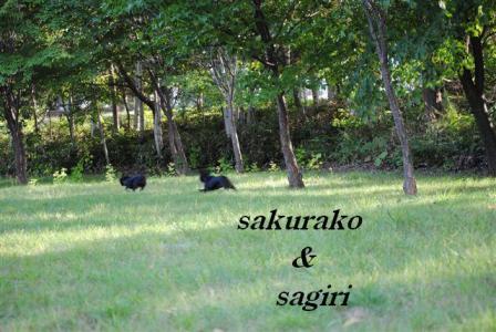 9月9日桜子&サギリ