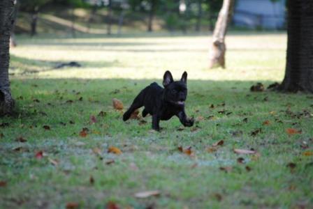 9月18日puppy