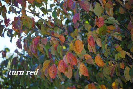 9月29日紅葉