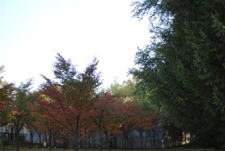 10月1日紅葉