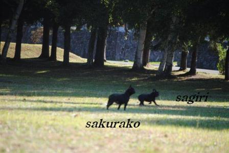 10月1日桜子&サギリ