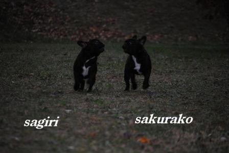 10月3日サギリ&桜子
