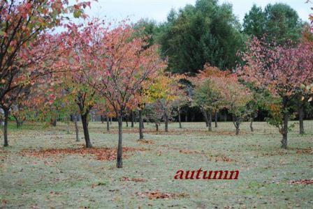 10月9日秋景色