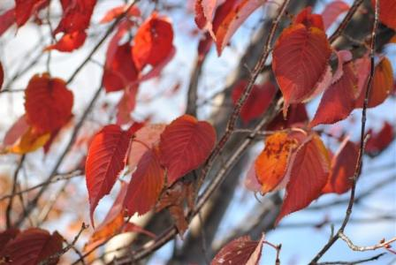10月19日紅葉