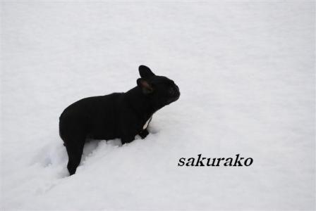 10月27日桜子