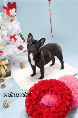 クリスマス桜子