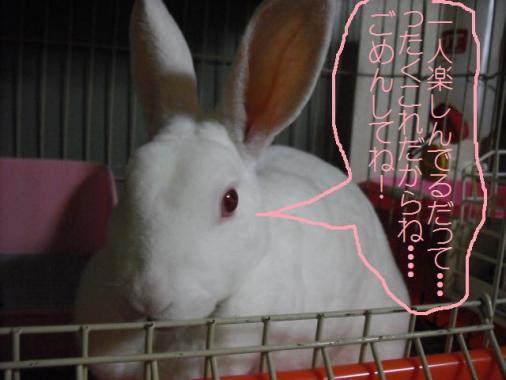 023_20111003101518.jpg