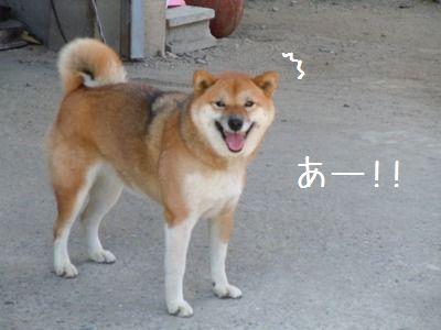 犬好き疑惑1