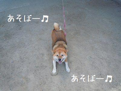 犬好き疑惑2