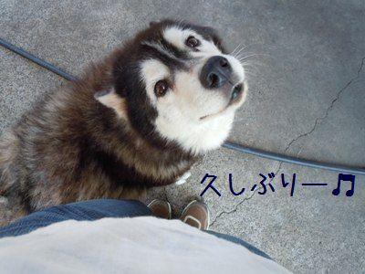 犬好き疑惑3