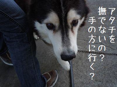 犬好き疑惑6