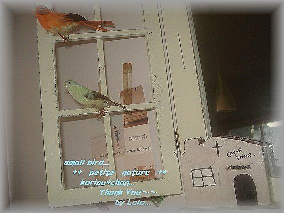 小鳥ちゃんディスプレイ