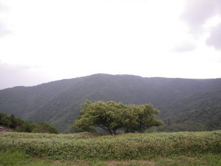 2010-7-10 048