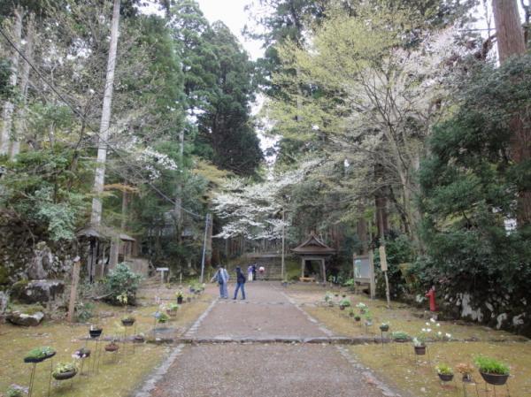 2011-04-300096.jpg