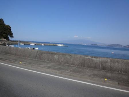 2011-2-26 河津桜0020