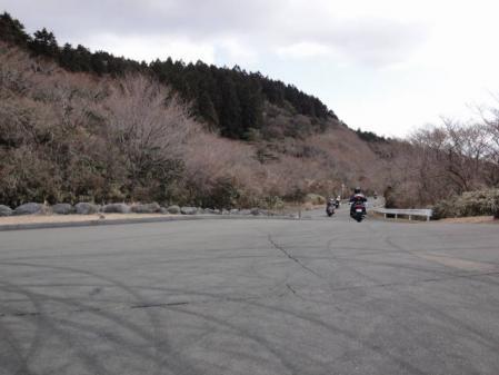 2011-2-26 河津桜0031