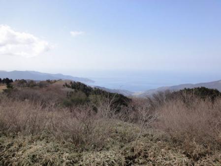 2011-2-26 河津桜0029