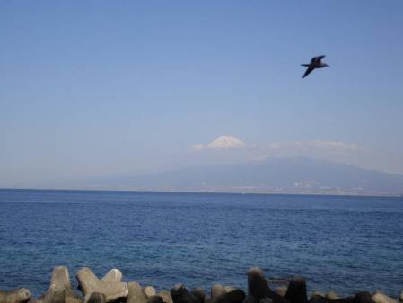 2011-2-26 河津桜0024
