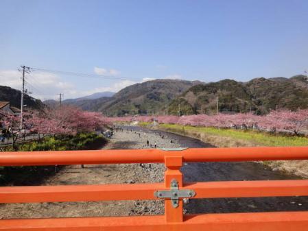 2011-2-26 河津桜0051