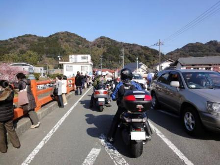 2011-2-26 河津桜0052