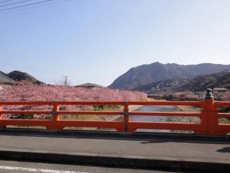 2011-2-26 河津桜0053