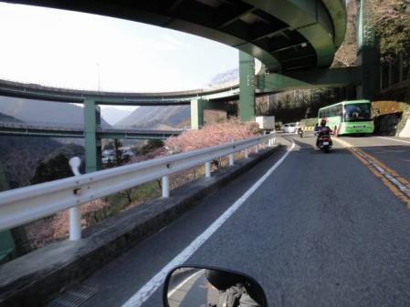 2011-2-26 河津桜0066