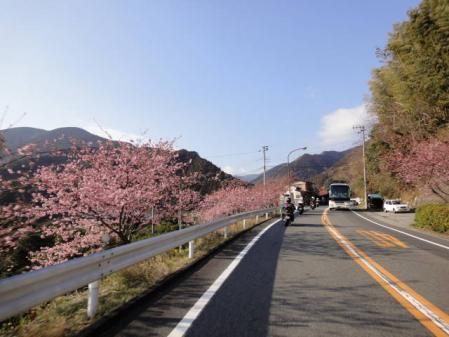 2011-2-26 河津桜0062