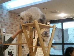s-猫登る