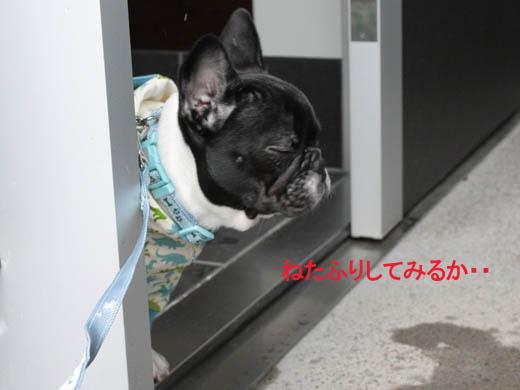 20120306-yuki