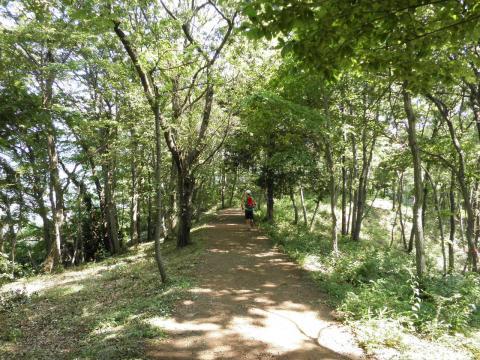 緑の山道58