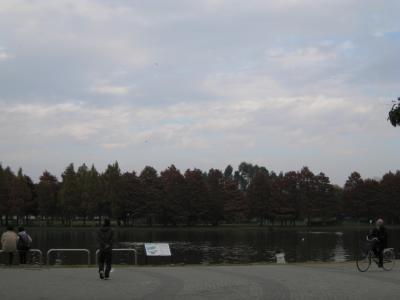 mizumoto11-21-12.jpg