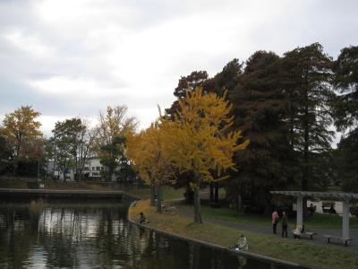 mizumoto11-21-13.jpg