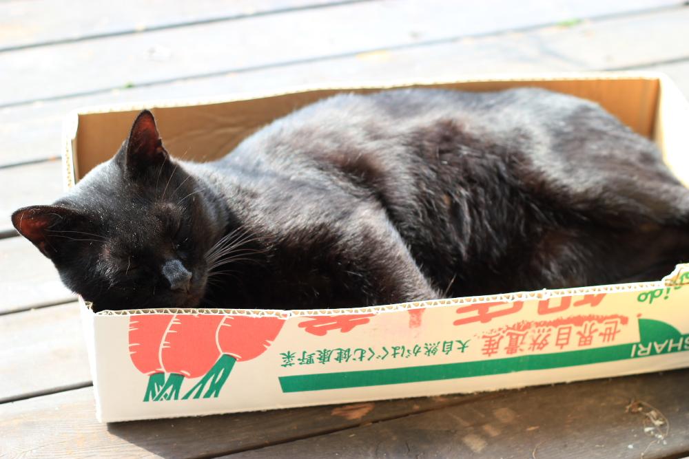 Kuro201110133.jpg
